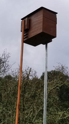 Barn owl house with rescue owls safely placed inside. Cover is so the owls can rest overnight and eat food provided to them in the Amador Barn Owl Box Company house. We donate our time and services to Peninsula Humane Society and Wildlife Center of Silicon Valley.